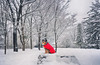 Watch Dog (flashfix) Tags: march092018 2018inphotos ottawa ontario canada nikond7100 40mm nikon flashfix flashfixphotography portrait sock man winter snow dog canine animal pet austrailanshepherd triaustrailanshepherd bluemerle tricolour heterochromia panorama rock park trees