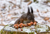 Bon Appetit! (Maryna K.) Tags: animal squirrel eichhörnchen cute animalplanet wildlife
