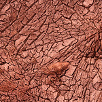 Fractured Mud thumbnail
