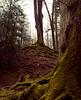 Sleepy Hollow ? (Ornicar photographie) Tags: forest dark dream pay nature tree moss light green sleepy hollow wood