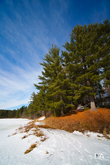 As the World Turns (Thousand Word Images by Dustin Abbott) Tags: 2018 sonya7riii ilce7rm3 beautiful winter petawawa photography sony review mirrorless dustinabbottnet bluesky thousandwordimages trees dustinabbott sonya7r3 carlzeiss fullframe forest hiking comparison ontario canada test pembroke lens photodujour ca