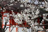 IMG_0841 (digitalbear) Tags: 2018 spring trip to kyoto japan canon powershot g1x mark3