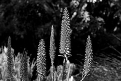 Botanical Gardens 33 (TheseusPhoto) Tags: flowers garden nature naturephotography beautyinnature bloom blancoynegro blackandwhite monochrome monotone noir