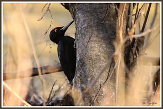 Pic noir 180308-09-P