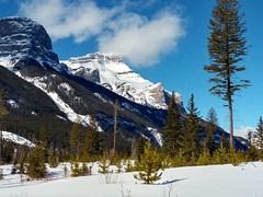 Blue sky winter day! (altamons) Tags: altamons xcountry winterland winter snow ski rockies canadian canadianrockies kcountry kananaskiscountry kananaskis canada alberta nordiccentre canmore canmorenordiccentre mountrundle rundle banff banffnationalpark