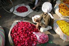 Flowers in Delhi (Iam Marjon Bleeker) Tags: india delhi newdelhi market flowers peoplefromindia colorful color dag3md0c6863g chandnichowk olddelhi