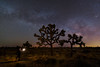 Tree of Life (Darkness of Light) Tags: joshua tree national park np desert mojave california southern palm springs milkyway milky way sony a7r2 a7rii zeiss batis 18mm f28