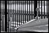 Tokyo: Impressions of a great city (Matthias Harbers) Tags: park tree cherry blossom spring hobby photo life nikon 1 v3 dxo photoshop japan bw black white nikkor outdoor architecture elements topaz labs omot tokyo metropolitan living home monochrome city street impression car vr 10100mm f456 sports automobil supercar road
