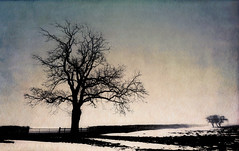 Cold Winter (JBK-Photos) Tags: tree silhouette winter cold winterscene winterlandscape holwell leicestershirelandscape