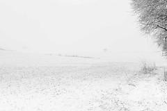 Winter Impression (jotxam) Tags: ausenaufnahme badenwürttemberg baum deutschland ef50mmf18stm eos5dmkii felder germany landscape landschaft normalobjektiv outdoor querformat schnee wurmlingen blackandwhite bw calm dramatic dramatisch einsam fields foggy horizontal lonely misty neblig niftyfifty normallens ruhig schwarzweis snow sw tree winter