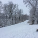 Bully goes out to the Rideau River Trail again