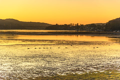 Sunrise Waterscape with Ducks (Merrillie) Tags: daybreak woywoy landscape nature australia foreshore newsouthwales earlymorning nsw brisbanewater morning dawn coastal water sky waterscape sunrise centralcoast bay outdoors