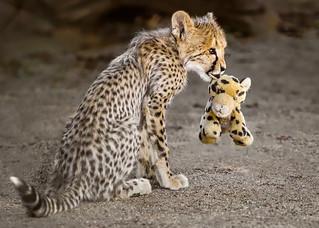 Roketi and Her Little Buddy