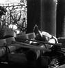 永続 (permanence) (Dinasty_Oomae) Tags: arco35 アルコ35 arco アルコ 白黒写真 白黒 monochrome blackandwhite blackwhite bw outdoor 東京都 東京 tokyo 江東区 kotoku 亀戸 kameido 亀 カメ 手水場 tortoise 神社 shrine 亀戸天満宮