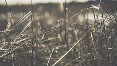 PB_012618_36 (losing.today) Tags: brianyoung oregon pacificnorthwest portland pdx portlandoregon portlandor winter nature outdoors naturepark plantlife plants moodyseason darkseason losingtoday grass grassstudies