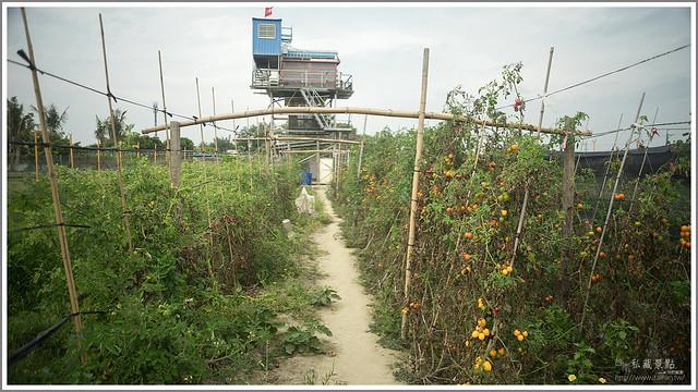 善化草莓 來去晴空農場找無農藥栽種的草莓 (14)