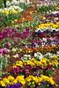 P3080036 (Vagamundos / Carlos Olmo) Tags: dallas usa eeuu vagamundos vagamundos2018 texas tejas flower flores jardín garden arboretum botanical botanicalgarden jardínbotánico