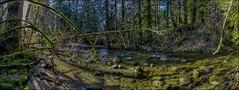 Kanaka Creek (Martin Smith - Having the Time of my Life) Tags: kanakacreek mapleridge martinsmith ©martinsmith samsunggalaxys8 creekboulders pano panorama landscape britishcolumbia canada ca shadows boulders creek
