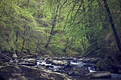 170412_MG_9732 (clicrd) Tags: navarra bosque río river green verde arroyo