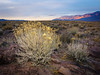 Shrubby Duo (dwblakey) Tags: hike landscape desert plants bishop mountains evening rocks california hiking sky outdoors flowers inyocounty volcanictableland volcanictablelands whitemountains unitedstates us