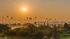 Balloons over Bagan during the sunrise (patuffel) Tags: balloons over bagan sunrise sun rise morning myanmar burma pagoda pagodas temple temples