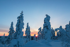 Lappland - Laponie (Mathieu Pierre) Tags: lights lapland canon 7dmark2 7dmarkii sigma14mmf18 sunset trees winter nature frost arctic hill finland nuit night sky snowytrees frozenlake