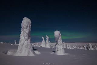 Winter Auroras