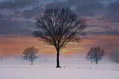 Three Trees (Gian Antonio) Tags: tramonto inverno trealberi