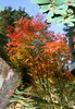 IMG_2896 (jumppoint5) Tags: hiroshima reflection creative japan miyajima leaves autumn colours