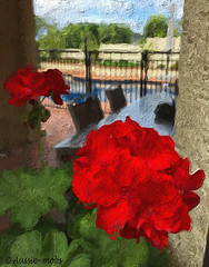Love the red (Aussie~mobs) Tags: red geranium art colourful potplant painterly