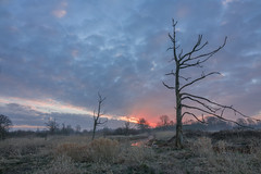Sunrise (Martine Lambrechts) Tags: sunrise morning landscape nature tree clouds