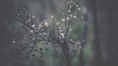 PB_012618_18 (losing.today) Tags: brianyoung oregon pacificnorthwest portland pdx portlandoregon portlandor winter nature outdoors naturepark plantlife plants moodyseason darkseason losingtoday