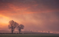 Offspring (Captain Nikon) Tags: leicestershire moody misty mist dawn trees silhouettes atmospheric rural england beaconhill woodhouseeaves landscapephotography landscapephotographer outdoorphotography digitalphotography winter season nikon