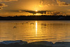 Golden Sunrise Waterscape with Birds (Merrillie) Tags: daybreak woywoy landscape nature bay birds foreshore newsouthwales clouds earlymorning nsw brisbanewater golden sun australia sunrise coastal morning outdoors waterscape water centralcoast sky dawn
