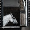 Austrian horse (from Córdoba) Tags: horse vienna stable austria