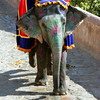 elephant's tear (kexi) Tags: jaipur rajasthan india asia amberfort square colors animal elephant crying tear canon february 2017 painted dressedup instantfave