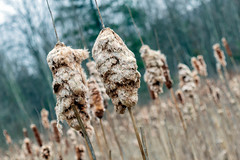 dmbphoto-4.jpg (Dave_Bradley) Tags: plant boca outdoor nature photography up close