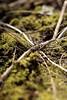 Rokinon 135mm f2 (williamssophia15) Tags: rokinon135mmf2 rokinon135mm rokinon samyang135mm samyang 135mmf2 135mm 6d canon6d naturelover plants green grass telephoto