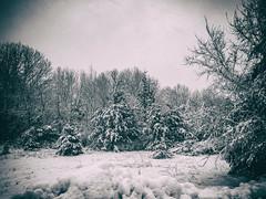 Overbearing Weight (PeZ_III) Tags: bostedor dbozphotography getolympus nature naturephotography natureporn artisticnature natgeo michigan puremichigan puremittigan jackson jacksonmichigan jxnart jxn jxnmi landscape landscapephotography