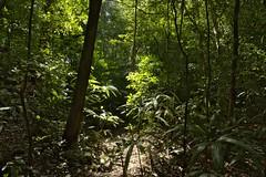 Back In The Forest - Yaxchilan Mayan Ruins (elhawk) Tags: forest jungle yaxchilan chiapas rainforest
