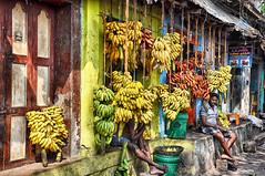 J'ai la banane ! (Docaron) Tags: inde india tamilnadu madurai madura மதுரை marché market banane banana couleurs colors colours échoppe stall shop dominiquecaron தமிழ்நாடு fruit