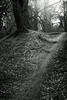 walking path 2 (Amselchen) Tags: tree trail path plants season spring light bnw blackandwhite mono monochrome dof depthoffield sony a7rii alpha7rm2 samyang 85mmf14 sonyilce7rm2