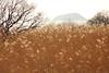 Lake Biwa (Teruhide Tomori) Tags: 滋賀県 琵琶湖 湖北 長浜市 日本 風景 自然 nature landscape japan japon lakebiwa tree winter lake grass