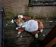 One Too Many (Katrina Wright) Tags: img1161 toy stuffy cat tiger abandoned neglected decay forgotten stuffing melancholy iphone sad cold