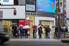 A Rainy Day in Roppongi, Tokyo, Japan (takasphoto.com) Tags: 23specialwardsoftokyo asia asian d600 edo fullframe honshū japan japon japón kantō kyūshū nikkor nikon nikond600 photography street streetphotography tokio tokyo tōkyō токио япония יפן اليابان ژاپن एशिया जापान ประเทศญี่ปุ่น アジア ストリートスナップ ニコン 亜細亜 日本 東京 東京都 도쿄 일본 rain umbrella umbrellas paraguas rainy rainyday raining wet azabu police polizei policia lady ladies girl girls men man woman women nexus cocacola cola vendingmachine coca his