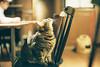 CNV000016 (雅布 重) Tags: f100 nikkor 50mm f14d tudorcolors xlx200 film snap japan tokyo 2018 cat 寵物 貓 木質
