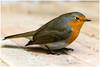 robin (rcfed) Tags: hasselblad macro digital mediumformat bird dreams