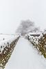 Snow on the path towards Rabbit Hill (jackharrybill) Tags: tree snow winter haworth path leadinglines