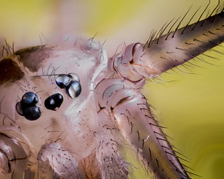 Some spider