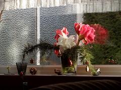 Die Reste vom Weihnachtsstrauß (onnola) Tags: koblenz rheinlandpfalz deutschland germany rhinelandpalatinate blumen blumenstraus amaryllis kiefer weihnachtsstraus weihnachten dekoration christmas xmas decoration bouquet fensterbrett fenster sonne sun window windowsill